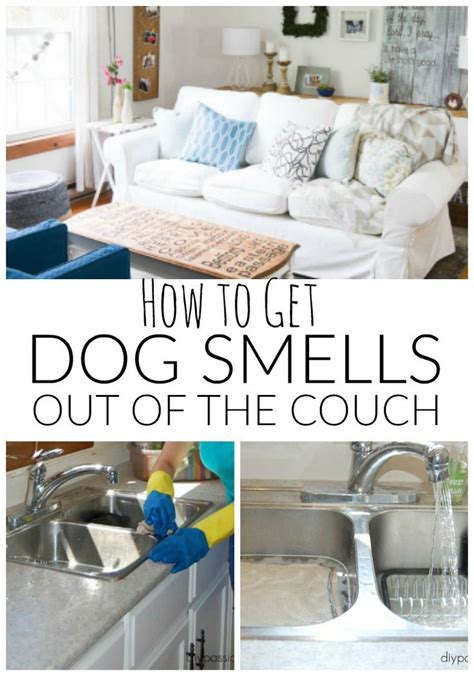 how to make couch smell better 25 best dog smells ideas on pinterest stinky dog dog