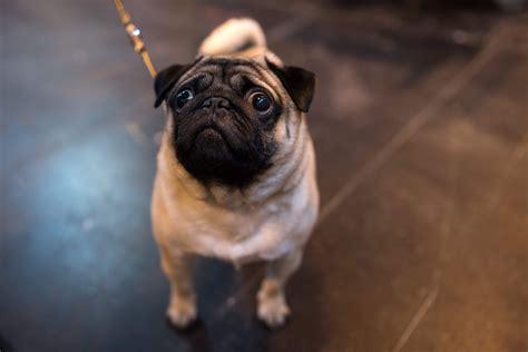 video   pet spa owner manhandling  abusing  dog