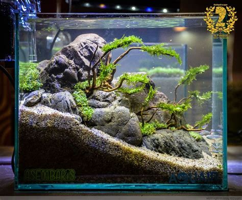 Fish For Aquascape by 25 Best Ideas About Aquarium Ideas On Fish
