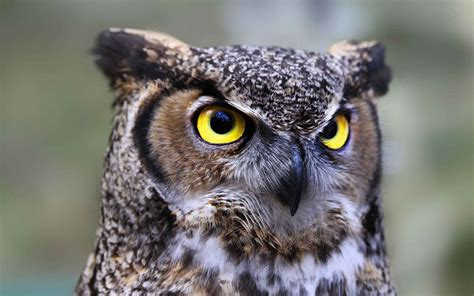 owl symbolism learn tattoo meanings and why they re