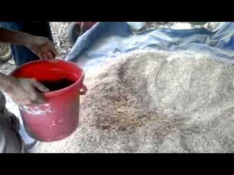 Pakan Ternak Dari Limbah Jagung gdbapoiwkiy videolike