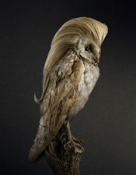 funny portraits of birds with luscious heads of hair my