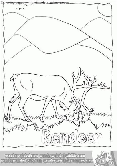 real animal coloring pages timeless miracle com