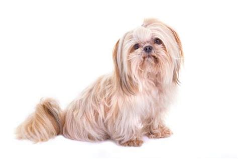 dogs for time owners 10 best breeds for time owners top tips