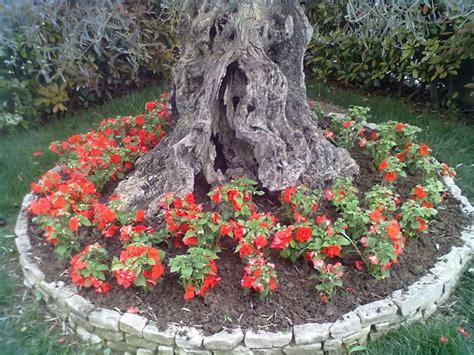 aiuole fiorite tutto l anno aiuole fiorite tutto l anno fiori idea immagine