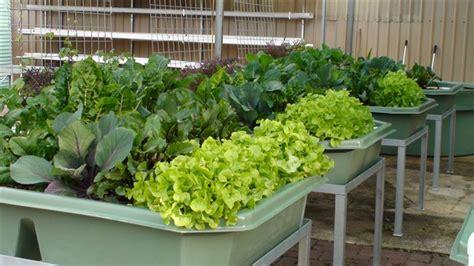 backyard hydroponics home aquaponics considerations for backyard aquaponics