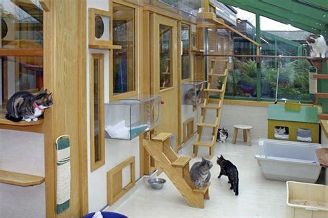 Cat Room Ideas by Interesting Cat Trees