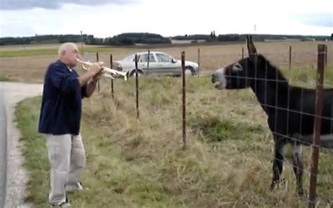 sorprenden hombre cojiendo una vaca apexwallpapers com gorda cojiendo con un burro top playas de veracruz