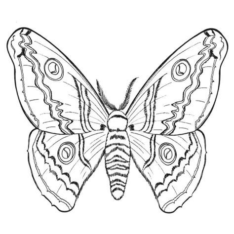 imagenes de mariposas para colorear grandes dibujos de mariposas para colorear colorear website