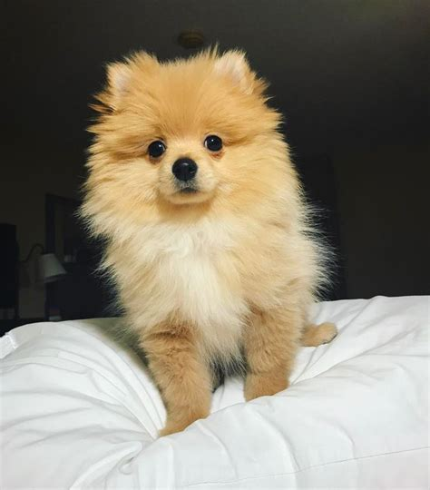 logan paul puppy 28 best images about kong paul on instagram the savages and 9