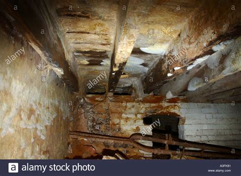 buying a house with dry rot dry rot fungus fruiting body serpula lacrymans spread on underside of stock photo