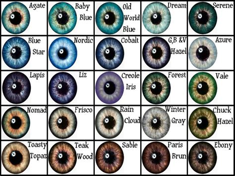 eye color genetics how to eye color calculator with grandparents work