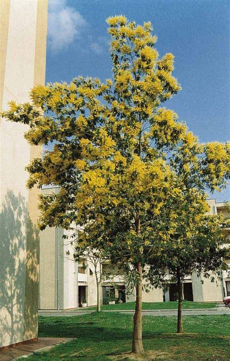 alberi per piccoli giardini piante per ornare parchi e giardini