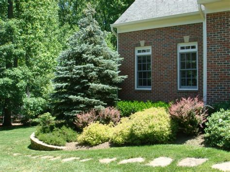 Bushes For Front Of House by Getting Your House Ready To Sell Series Plants Shrubs