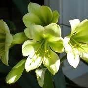 fiori primaverili elenco fiori primaverili fiorista fiori di primavera