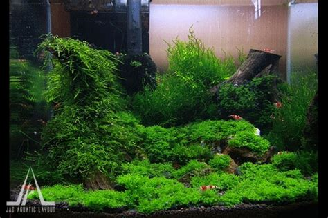 how to make aquascape 1000 images about aquaria aquascapes on pinterest