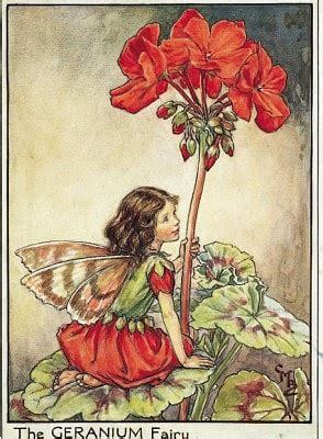 Flower Fairies Of The Garden Fairies And Dreams On Fairies Cicely Barker And Flower Fairies