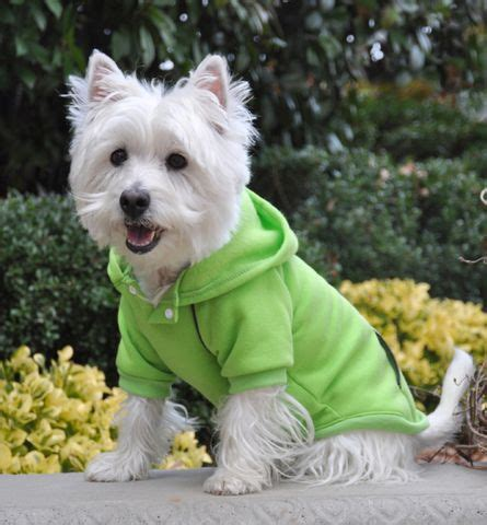 hoodies for dogs 627 best westies images on