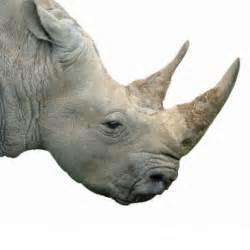pembient to 3d print rhino horns 3d printing industry