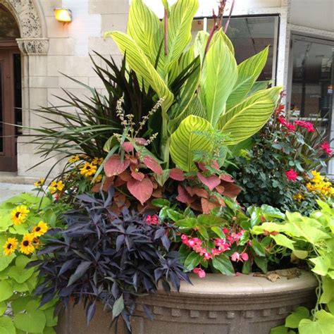 Planter Ideas Sun by 41 Best Images About Dramatic Planters On