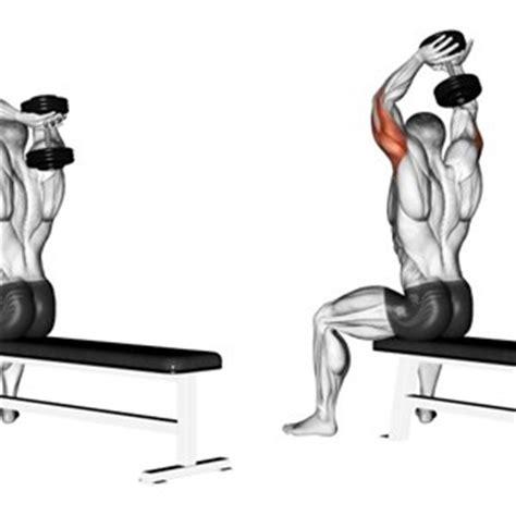 tricipiti a casa esercizi per i tricipiti muscoli info