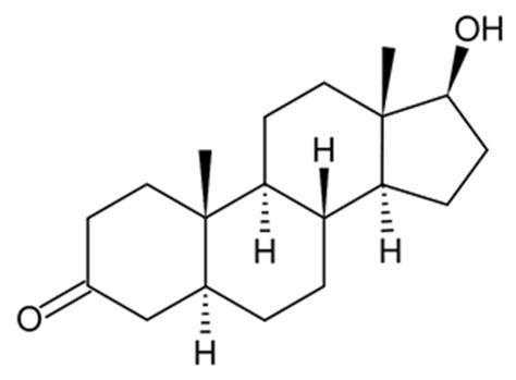 dht dihydrotestosterone what is dht s role in baldness dihydrotestosterone