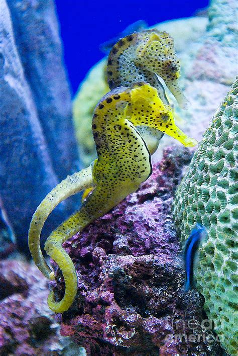 colorful seahorse 1000 images about seahorses on mars i want
