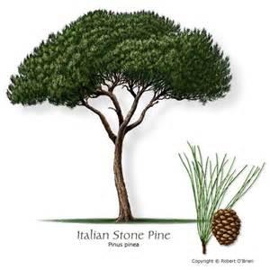 Pine umbrellas and italian on pinterest
