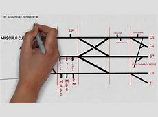 How to draw brachial plexus for anesthetists - YouTube Brachial Plexus Drawing