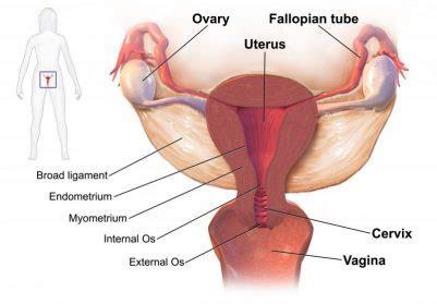 pelvic pain  pregnancy vicki hobbs