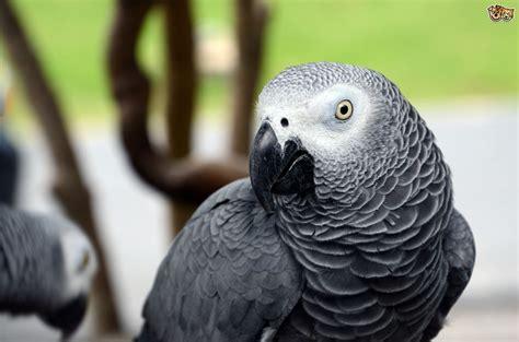 bird breeds most intelligent species of birds pets4homes