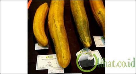 Labu Terbesar Dari Inggris 10 rekor buah dan sayur yang paling besar sepanjang masa