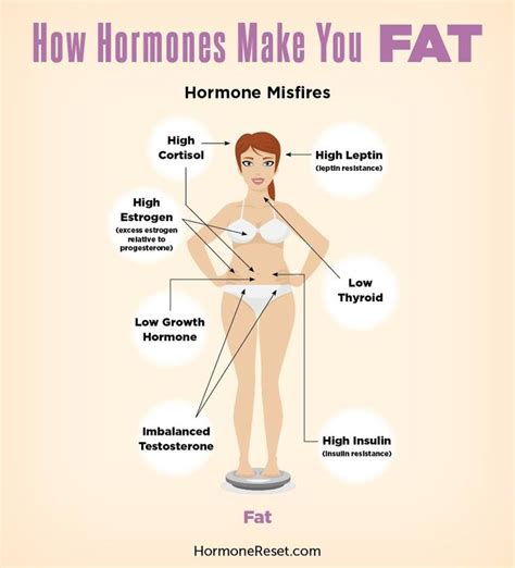 hormones and healthy fats 17 best images about hormones on health pms