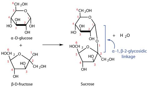 sucrose structural diagram carbohydrates