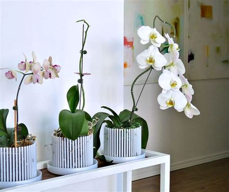 vaso per orchidee vasi per orchidee orchidee vasi per orchidee