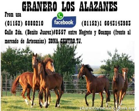 granero y veterinaria los potrillos granero los alazanes en tijuana tel 233 fono