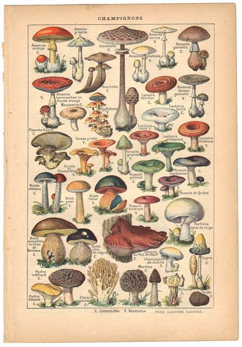 pattern french dictionary 38 best mushroom tattoos images on pinterest fungi