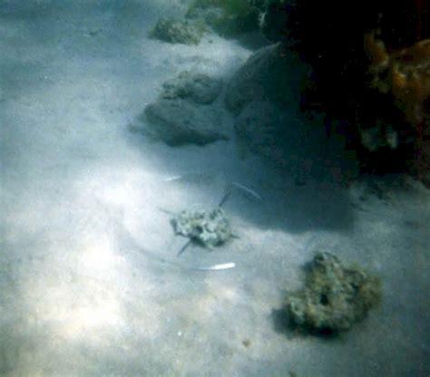 nabi musa membelah laut doovi bukti ilmiah nabi musa pernah membelah laut merah nirleka