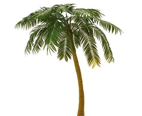 Palme Kaufen 412 palme kaufen home affaire kunstpflanze palme