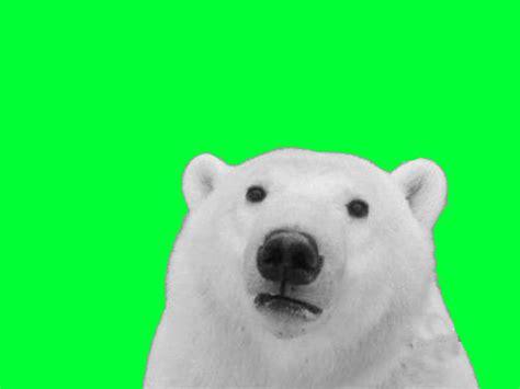 green screen polar bear   meme