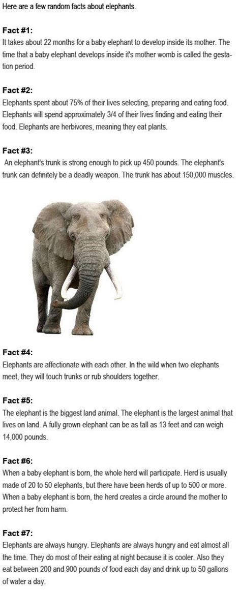 8 Facts On Elephants by 25 Best Ideas About Elephants For On