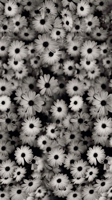 wallpaper whatsapp vintage tumblr black floral background tumblr 183