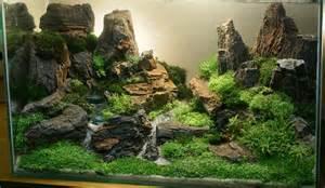 aquarium fish aquascaping for fish aquarium