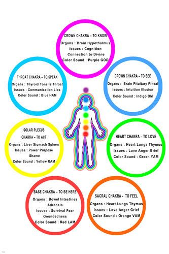 chakra colors and meanings chart chakra chart poster colors meanings parts 24x36