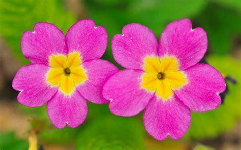 wallpaper small flower cute flowers best wallpaper hd
