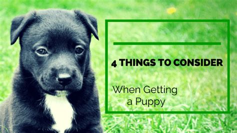 things to when getting a puppy four things to consider when getting a puppy wellness coaching for