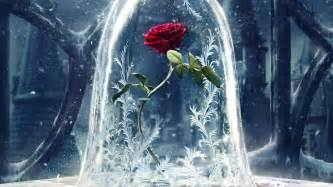 enchanted roses the enchanted rose beauty and the beast 2017 2560x1440 whqd 16 9 wide quad high