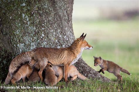 imagenes de animales con sus crias fotos de animales imagenes de animales mamiferos aves