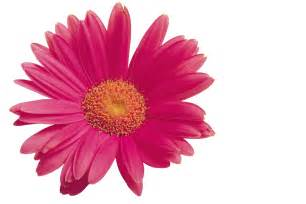 Flower Pic by Flower Animated Gif Clipart Best Clipart Best