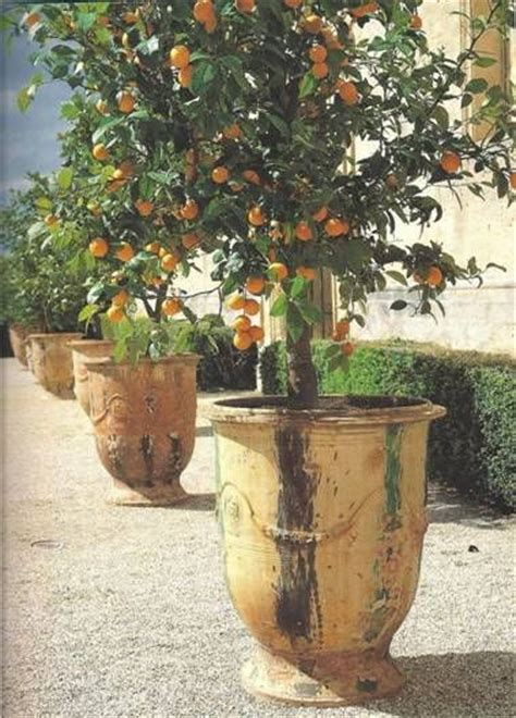 patio orange tree the 25 best potted trees ideas on patio